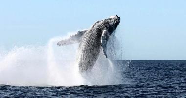 Ballenas: una historia digna de contar