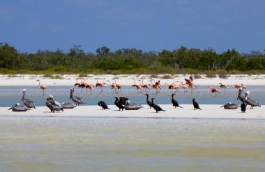Vida Silvestre en la Isla de Holbox, Quintana Roo