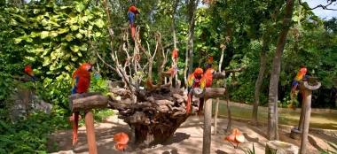 Conecta con la naturaleza en Riviera Maya