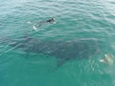 Observación de Ballenas Los Cabos