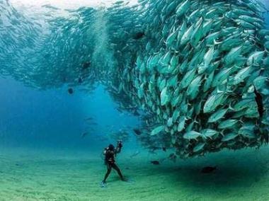 El acuario del mundo
