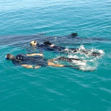 Esnorqueleando con el tiburón ballena en México
