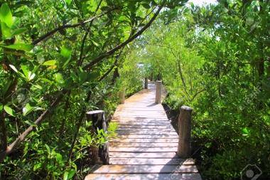 Verde profundo maya en las selvas de Quintana Roo