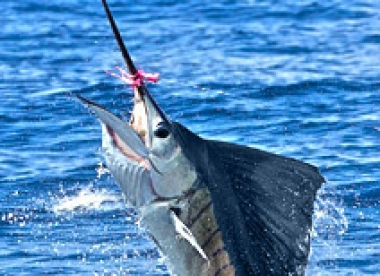 Pesca Deportiva de Pez Vela