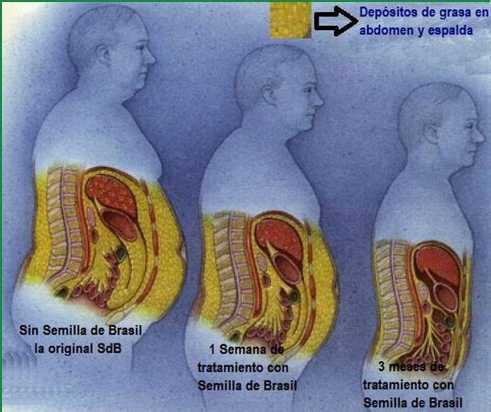 Preguntas frecuentes de semilla de brasil para bajar de Semilla de brasil es toxica