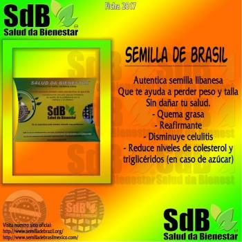 Semilla de brasil | Semilla de Brasil
